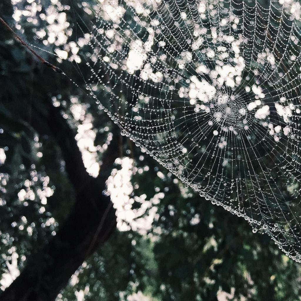 detailed Spider web photo